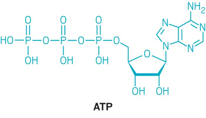 Struktur ATP © cen.acs.org