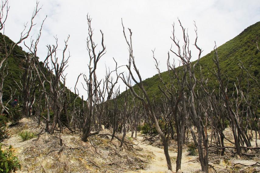 Jalur Pendakian Hutan Mati Papandayan © IndonesiaKaya