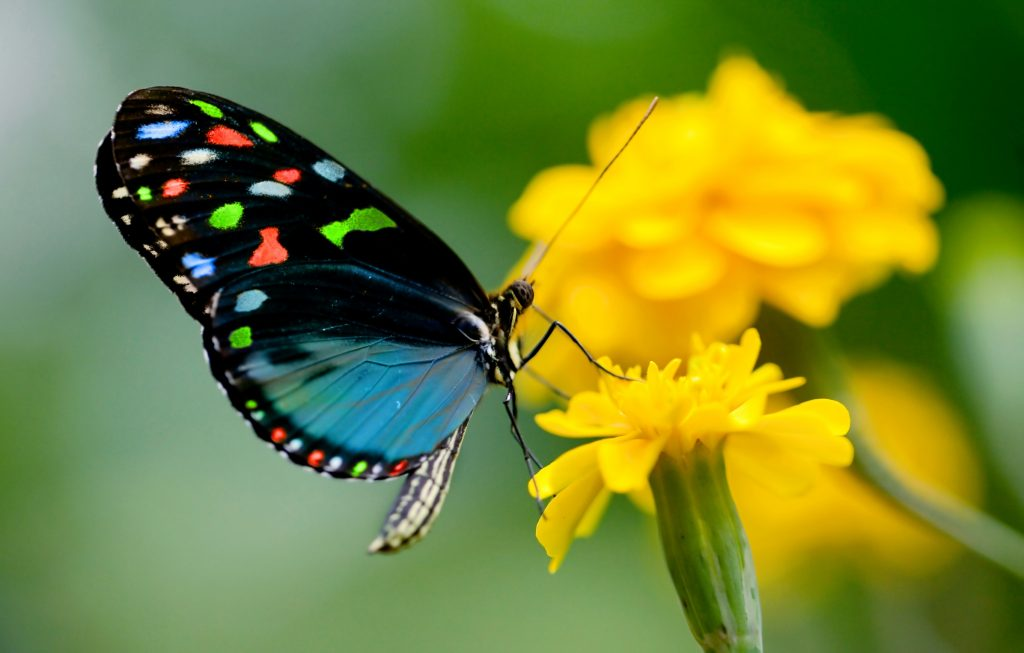 Kupu-kupu © hdnicewallpapers.com