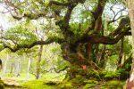 Cagar Alam Mutis, Hutan Bonsai di Indonesia
