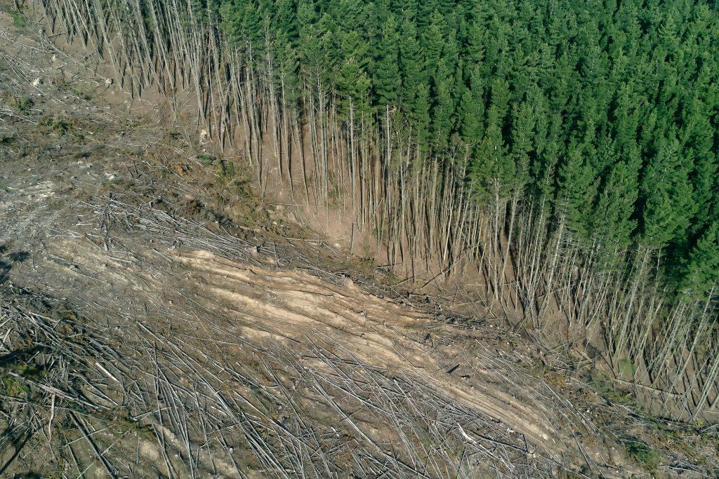 Deforestasi yang terus terjadi © Marian Kroell via Unsplash