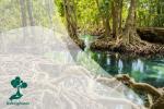 Eksistensi Hutan Bakau sebagai Penangkal Malaria