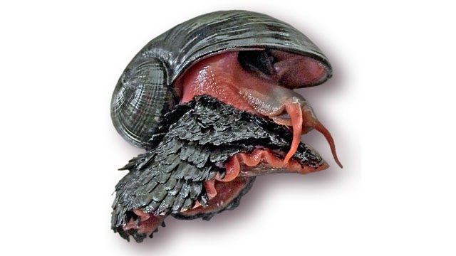 Gambar 1. Scaly-foot Gastropod © Technology Networks