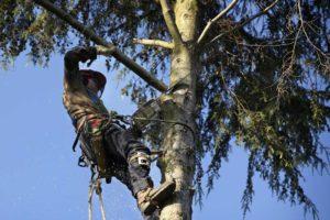 Gambar 1. Arborist Sang Dokter Pohon