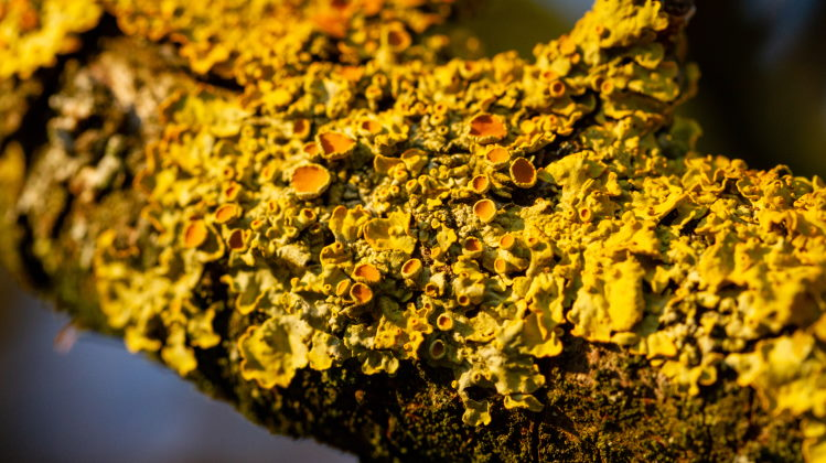 [1] Lichen (Photo credit: earthlife.net)