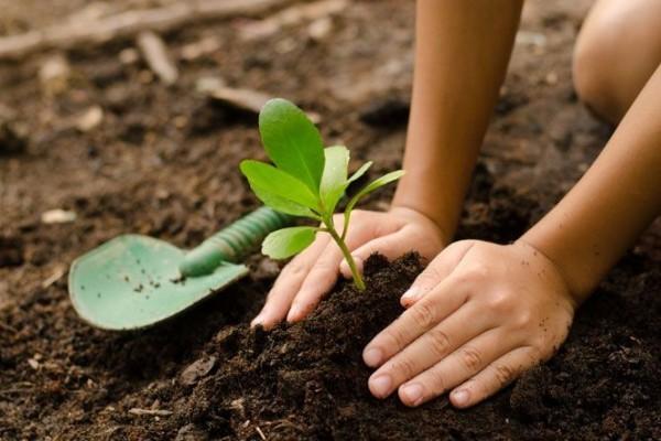 Gambar 1. Penanaman pohon