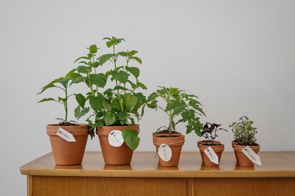 Gambar 1. Tumbuhan Memiliki Karakteristik Berbeda Antara Satu dan Lainnya