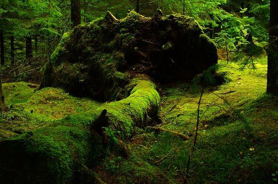 Gambar 1. Forest Moss Nature © Pixabay.com