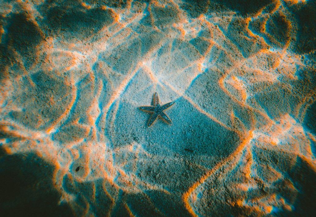 Gambar 2. Sea Star Underwater © Jakob Owens