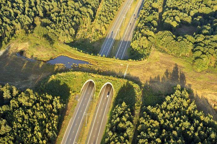 Gambar 2. Highway A50 Ecoduct