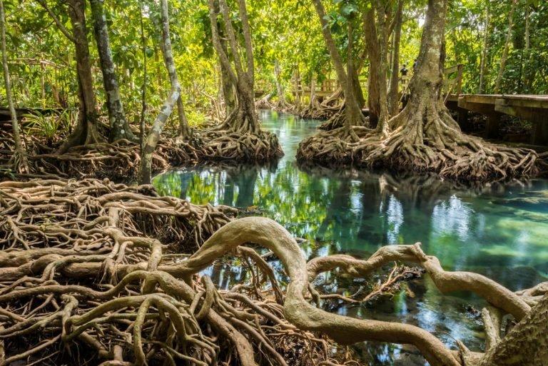 Gambar 2. Hutan Bakau