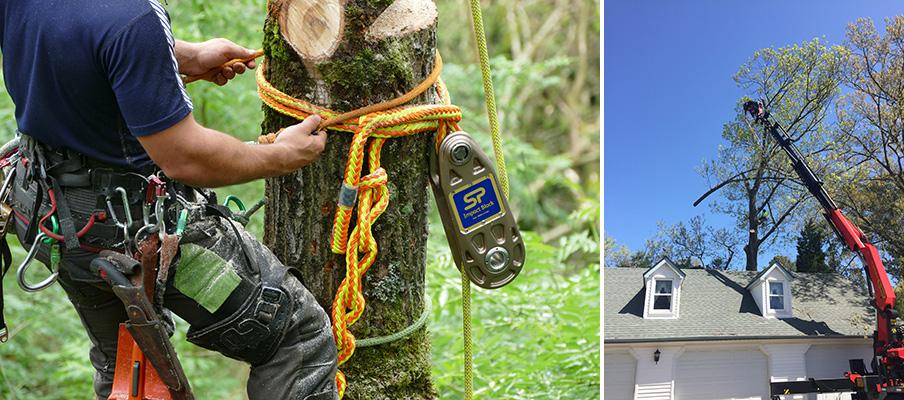 Gambar 2. Lokasi Dan Peralatan Seorang Arborist