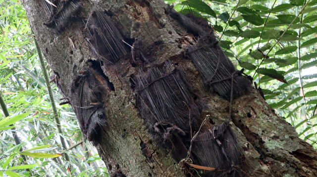 Gambar 2. Makam Bayi di Pohon Tarra