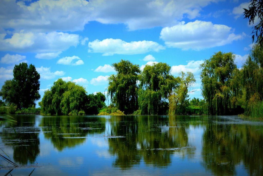 Gambar 3. Willow Trees on a Lake © Adina Voicu