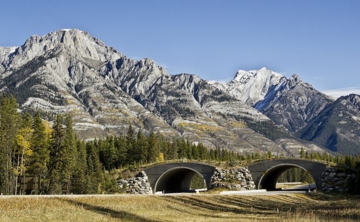 Gambar 3. Wildlife Overpass at Banff National Park