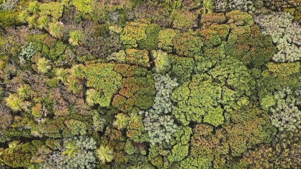 Gambar 3. Tampak Atas Hutan di Meksiko yang Menunjukkan Adanya Crown Shyness