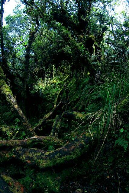 Gambar 4. Hutan Lumut Gunung Singgalang. © Pinterest.