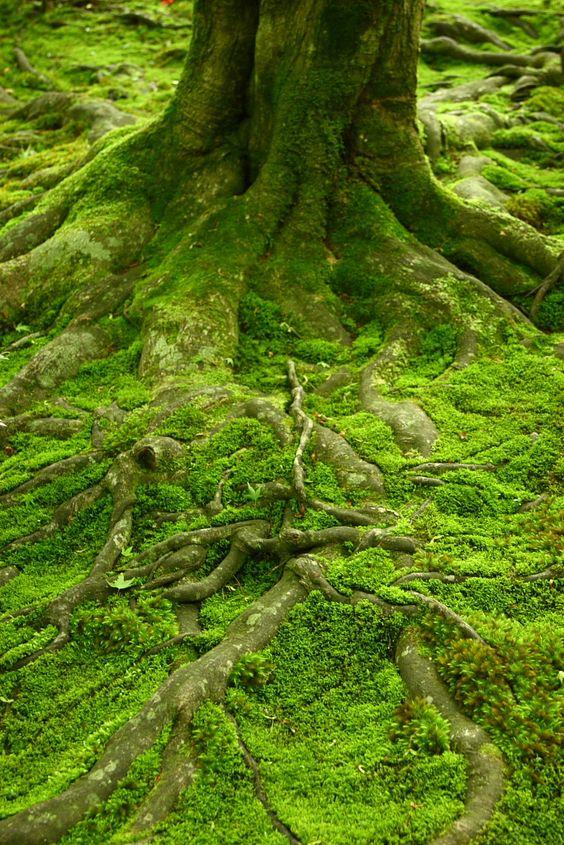 Gambar 2. Moss Bed © Pinterest