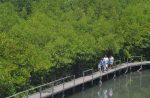 Ekoturisme, Jasa Lingkungan Hutan Indonesia