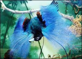 Bulu Hias Biru Si Cendrawasih Papua (thebeautyfourcountry.wordpress.com)