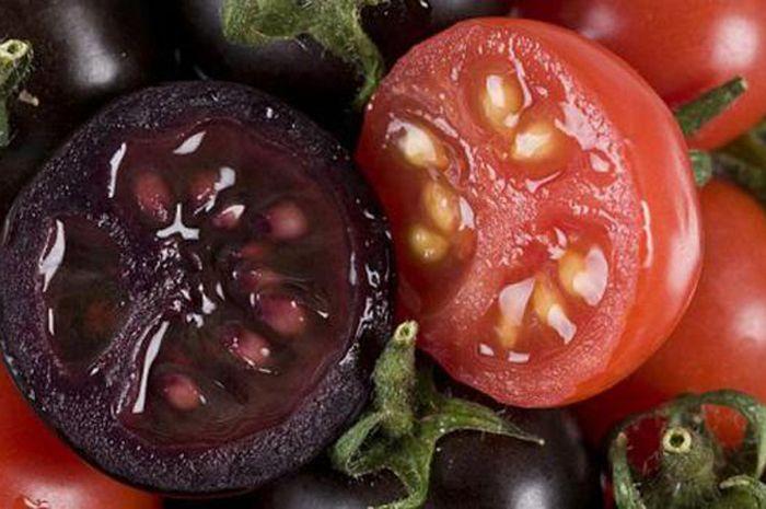 tomat dengan rekayasa genetik