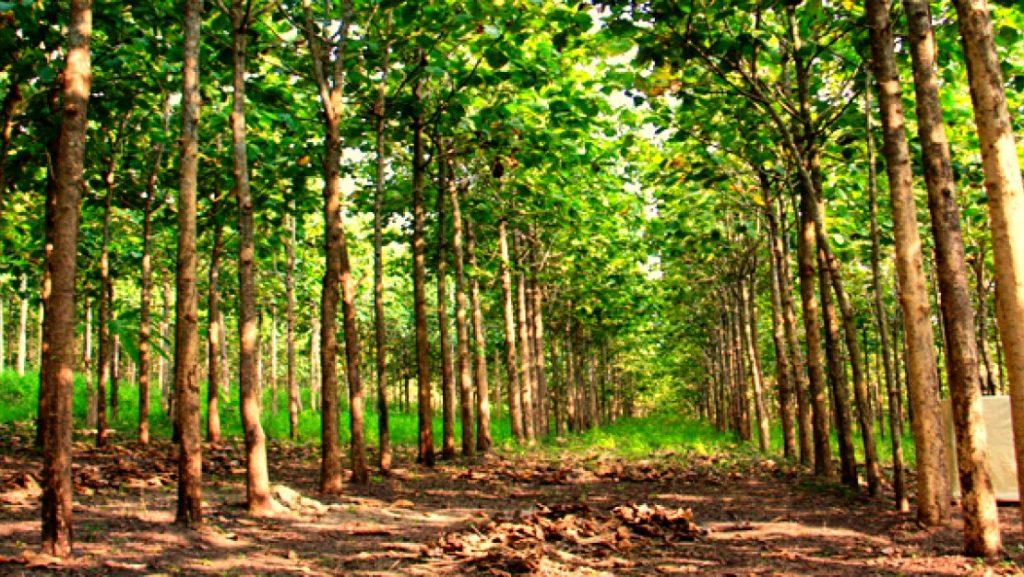 Gambar 1: Hutan
