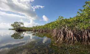 Gambar 1 Hutan Mangrove Habitat Kepiting Bakau