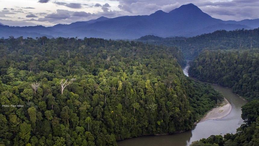 Hutan Taman Nasional Gunung Leuser @ dolandolen