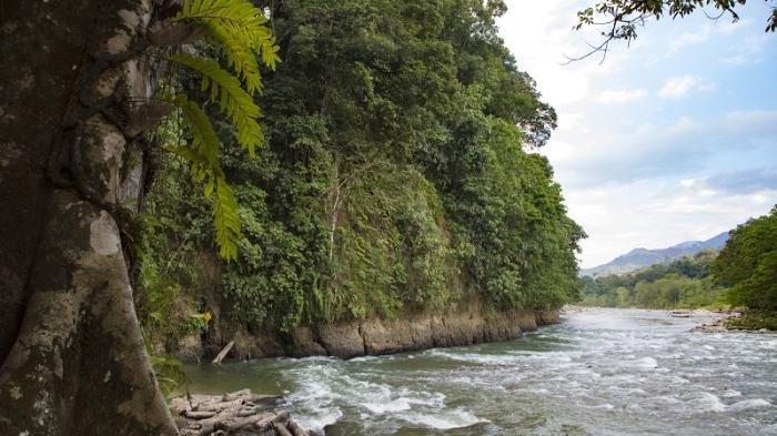 Kawasan Taman Nasional Gunung Leuser @ Tribunnews