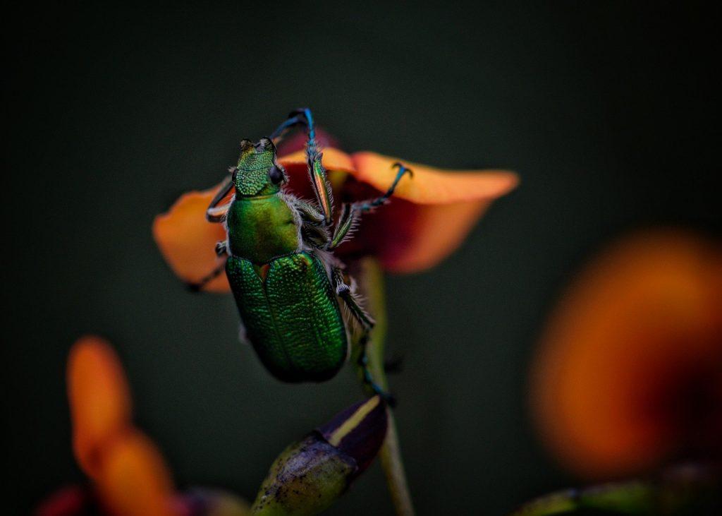 Gambar 3: Kumbang