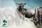 Melihat Tanda Perubahan Iklim dari Perilaku Hewan yang Berubah