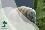 Hewan Tardigrades, Beruang Air Yang Kuat
