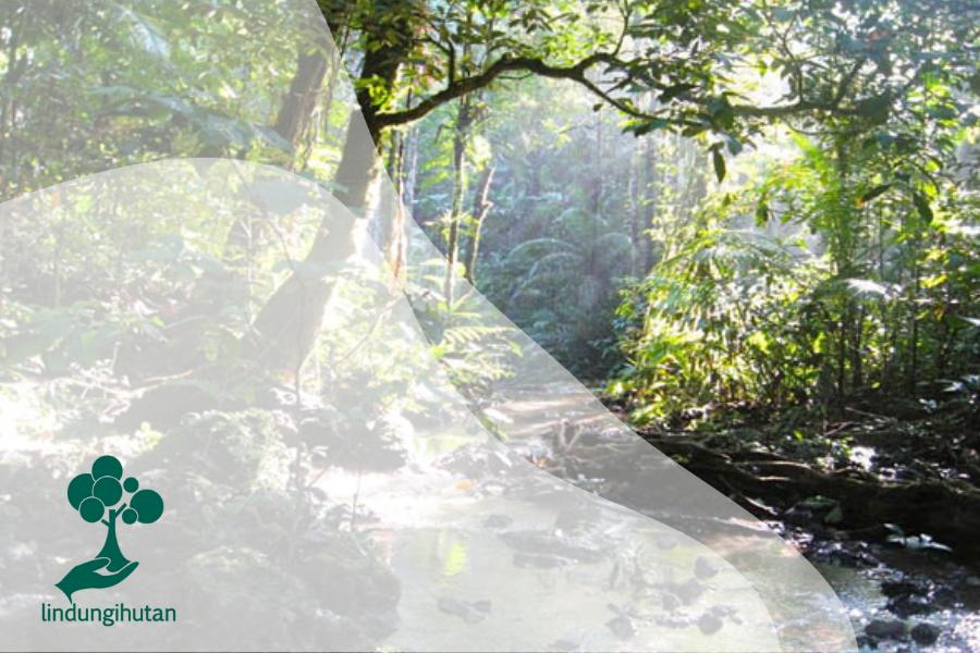Kalapi : Pohon Langka yang Hanya Berada di Sulawesi