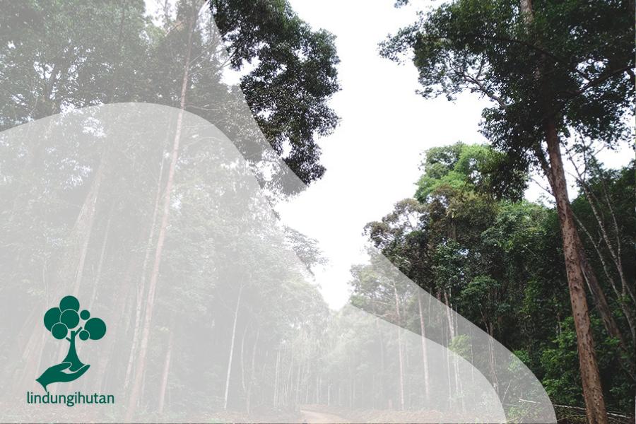 Tengkawang: Pohon Khas Kalimantan Barat yang Kini Terancam
