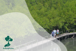 Mengenal Jasa Lingkungan Hutan: Ekoturisme