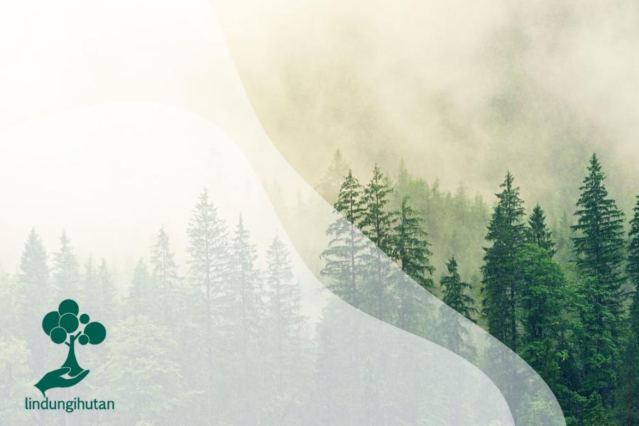 Mengenal Hutan Konifer: Ciri, Jenis hingga Karakteristik Flora dan Fauna
