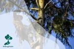 Mengenal Arborist: Dokternya Para Pohon