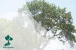 Selayang Pandang Pohon Elo: Tanaman yang Disucikan