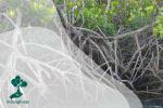 Potensi Besar Mangrove Sebagai Blue Carbon Pesisir Indonesia