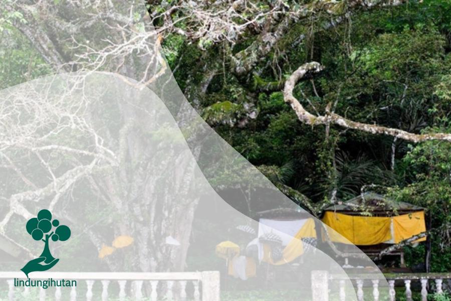 Pohon Taru Menyan, Penetral Bau Mayat yang Sangat Unik