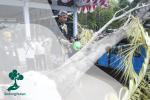 Ceblok Tandur Waringin, Tradisi Menanam Beringin di Jawa Tengah