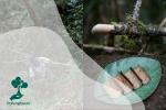 Tumbuhan Akway (Drimys spp) Endemik Papua