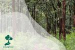 Sekilas Pandang Pohon Jati