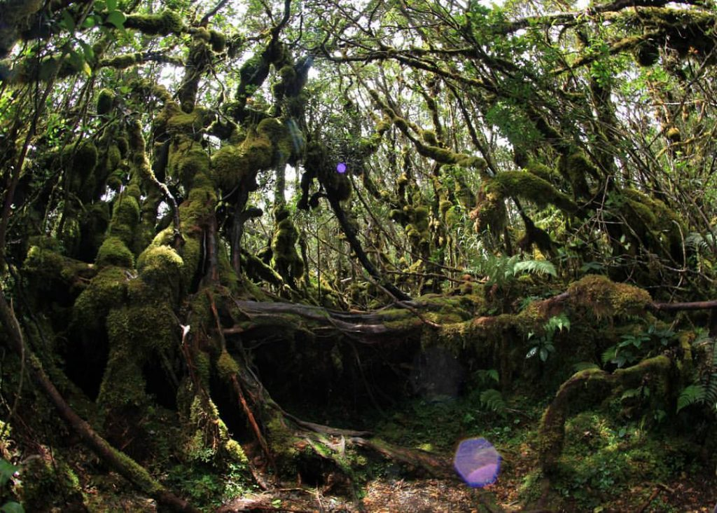 Hutan Lumut Gunung Singgalang/ andalastranswisata