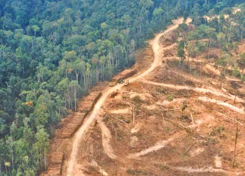 Alih fungsI hutan menjadi lahan