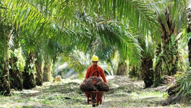 alih fungsi hutan menjadi perkebunan sawit