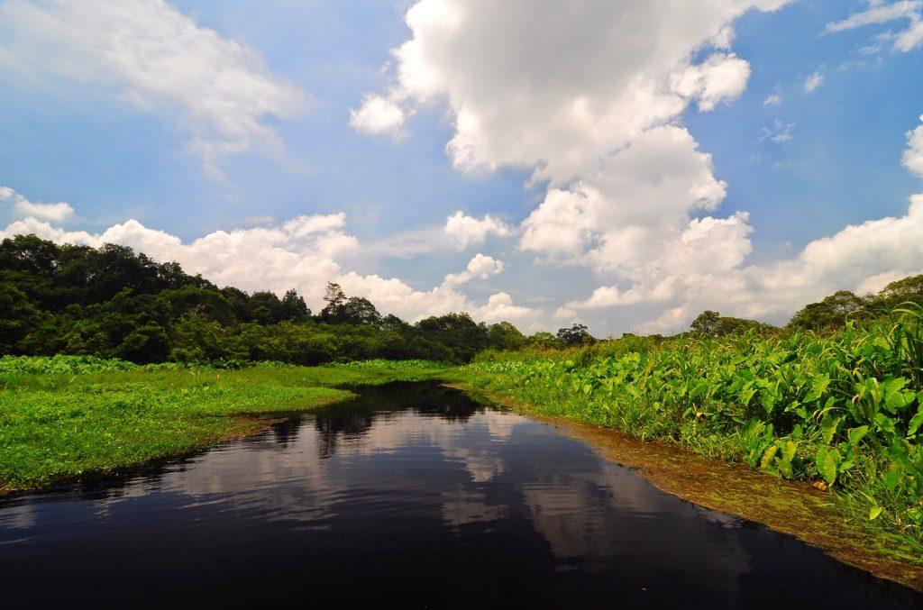 Gambar 1. Penampakan Rawa Danau