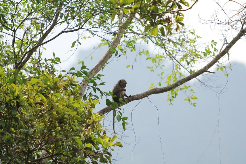 Gambar 3 Monyet yang dijumpai di Rawa Danau Di dalam suatu ekosistem sangatlah wajar bila terdapat kean