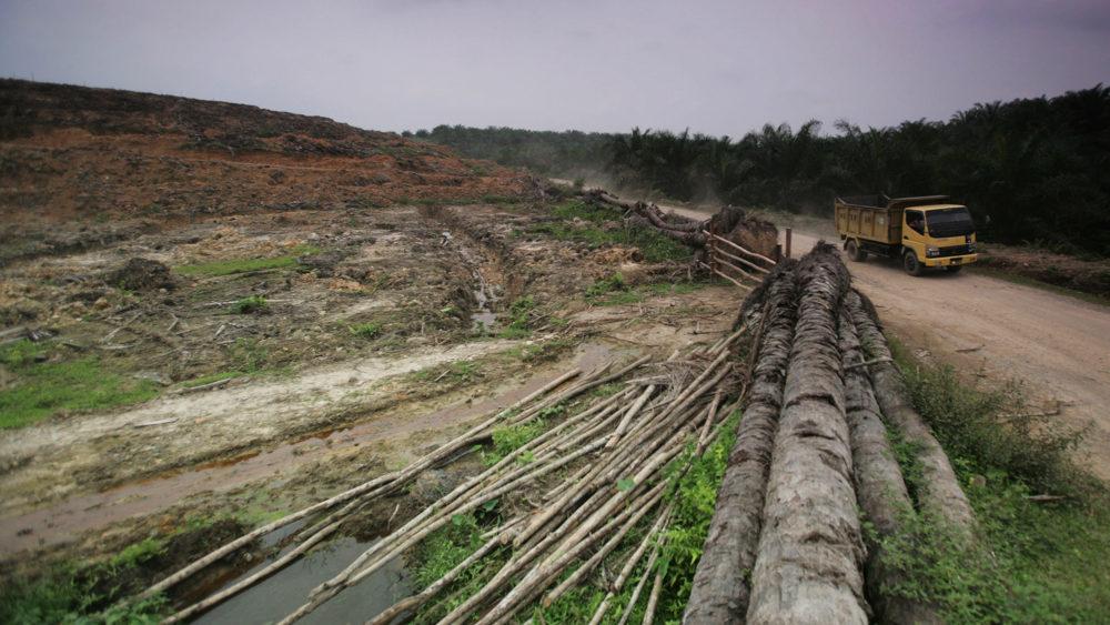 Gambar 2. Salah satu kawasan hutan di Indonesia yang ditebang untuk dijadikan perkebunan kelapa sawit