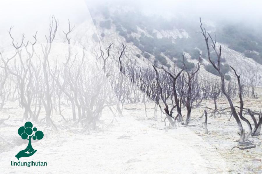 Hutan Mati Papandayan: Surga Kelabu di Tanah Garut
